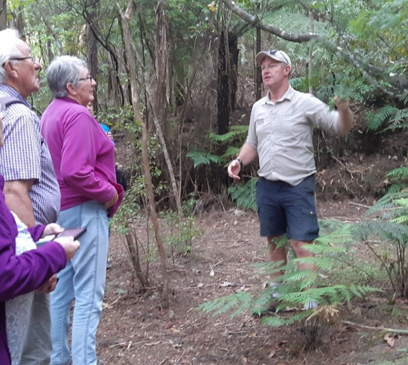 Coromandel Nature and Coast Tour - One day guided tour.