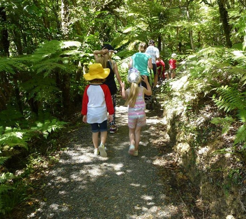 2 long bay guided kauri forest experience