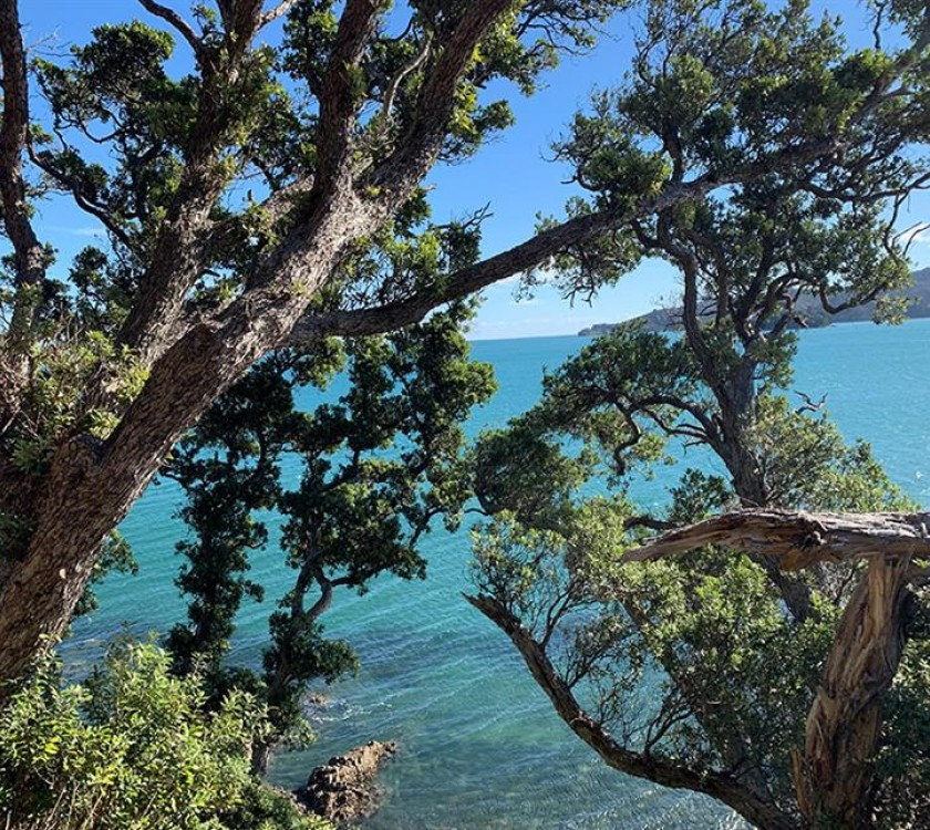 Long Bay Guided Kauri Forest Experience
