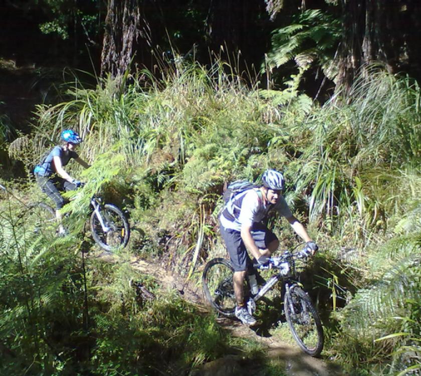 Whangamatā Ridges Mountain Bike Park