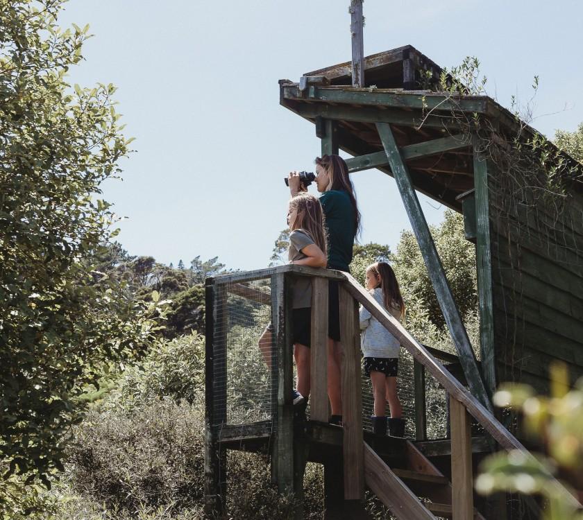 Driving Creek Conservation Park