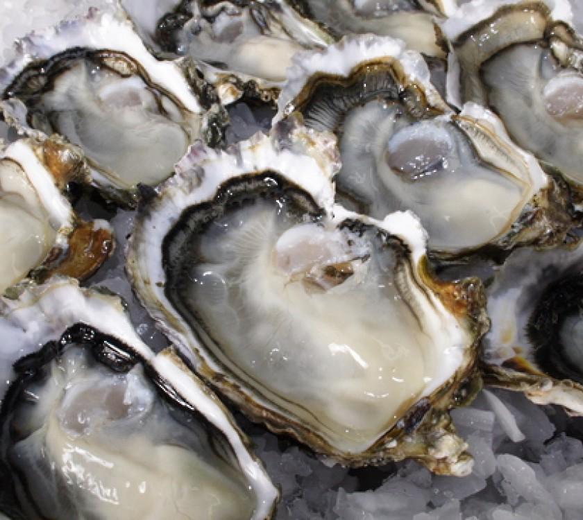 The Coromandel Oyster Company