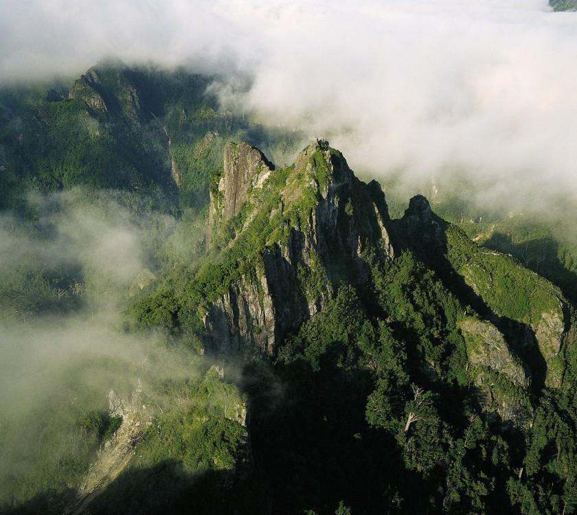 Pinnacles Coro Forest Park3