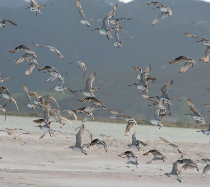 Seabird Coast Birds in flight