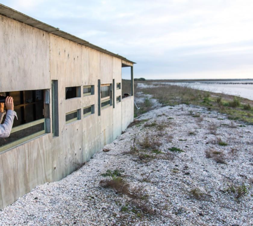 Shorebird Coast