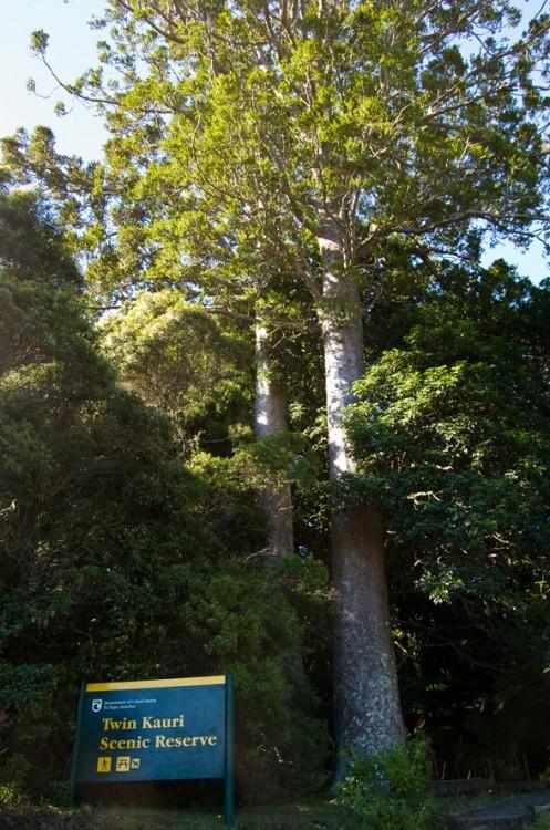 Twin Kauri Scenic Reserve