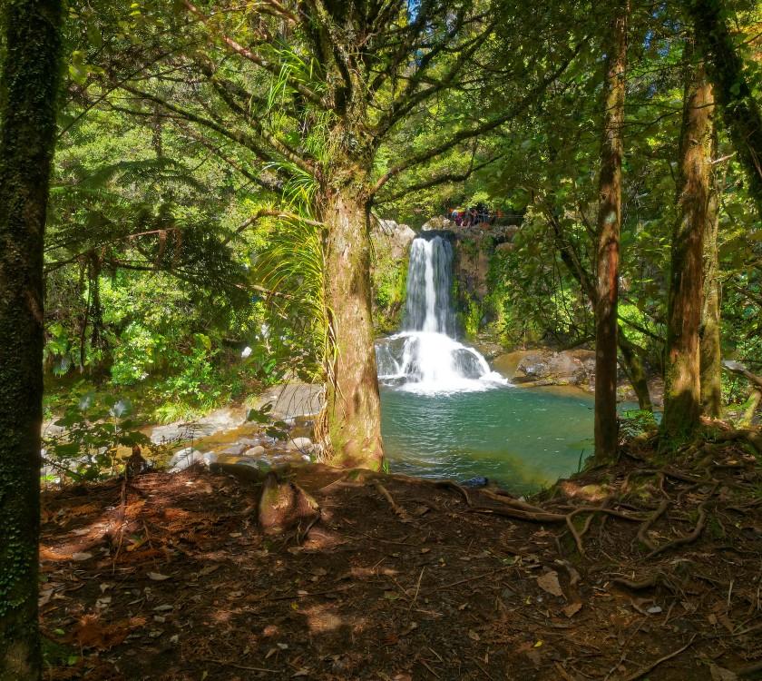 Waiau Kauri Grove and Waterfalls