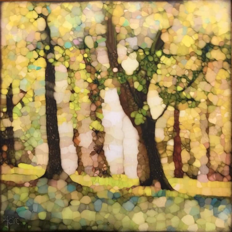 e l sunlight through the trees 4 25