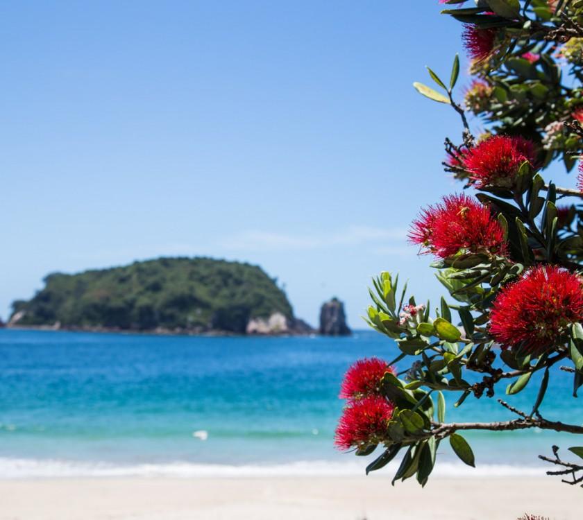hahei-holiday-resort-pohutakawas