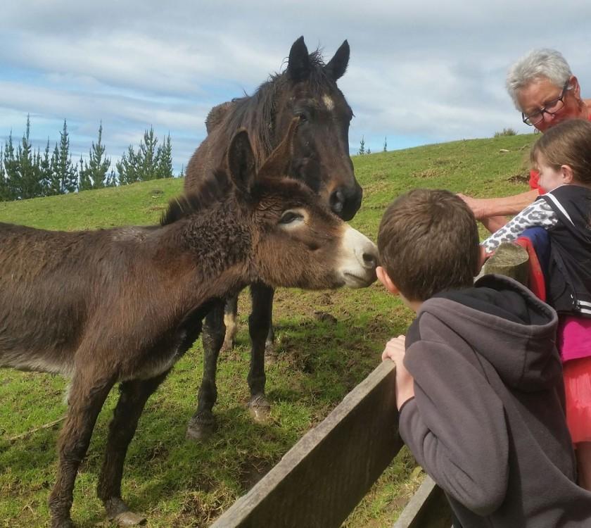 kids-and-horse-lulu